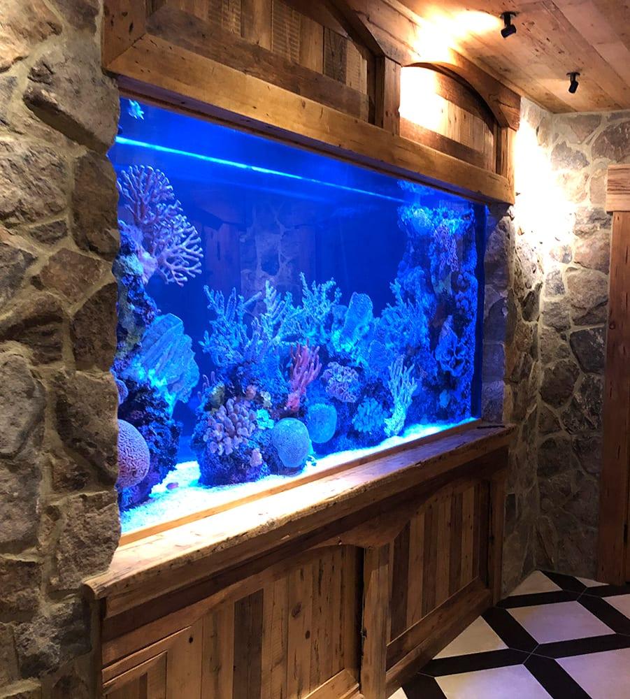 Aquarium Installation and Maintenance | Aquatic Impressions Baltimore